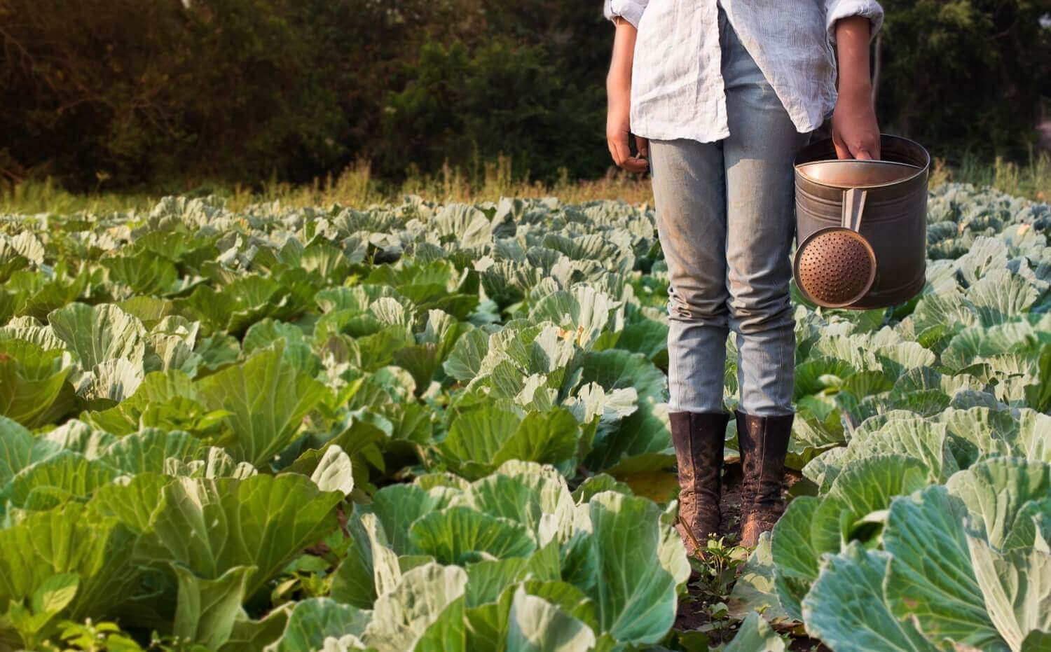 We believe that food is the single strongest lever to optimise human health and environmental sustainability on Earth.